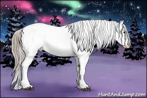 Horse Color:Chocolate Palomino Roan Appaloosa