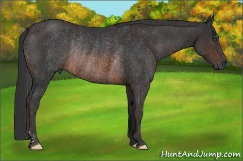 Horse Color:Brown Rabicano  Brindle