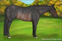 Horse Color:Brown Rabicano  Brindle