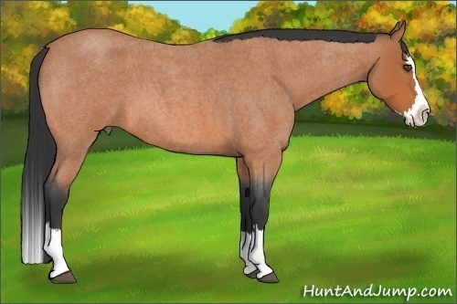 Horse Color:Bay Roan Splash