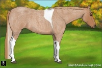 Horse Color:Red Roan Tobiano Frame