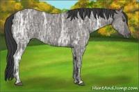 Horse Color:Grullo Ice