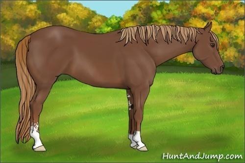 Horse Color:Chestnut Sabino