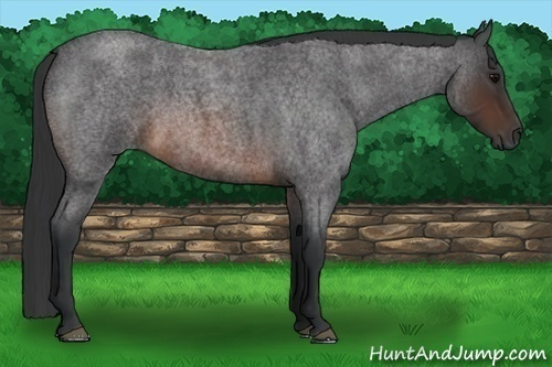 Horse Color:Brown Roan Rabicano