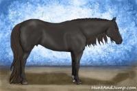 Horse Color:Liver Chestnut Frame