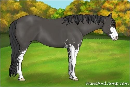 Horse Color:Black Sabino