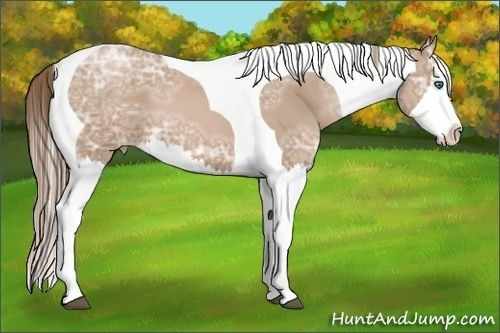 Horse Color:Black Ice Pearl Splash Tobiano