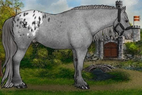 Horse Color:Black Appaloosa Rabicano