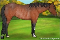 Horse Color:Brown Roan Frame Rabicano
