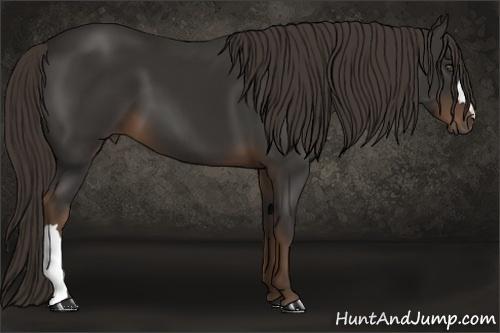 Horse Color:Liver Chestnut