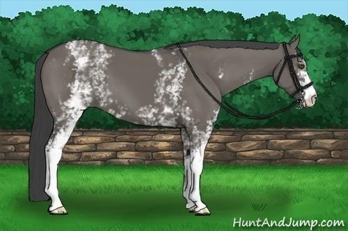 Horse Color:White Spotted Smokey Grullo