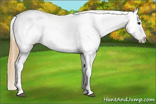 Horse Color:Buckskin Appaloosa
