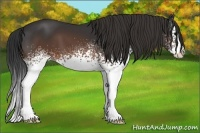 Horse Color:White Spotted Brown Splash