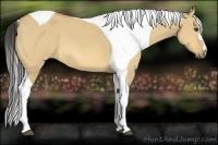 Horse Color:Buckskin Dun Tobiano