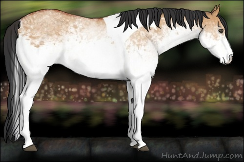 Horse Color:White Spotted Bay Dun Tobiano