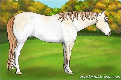 Horse Color:White Spotted Buckskin Pearl Dun Sabino