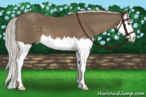 Horse Color:Chocolate Palomino Splash