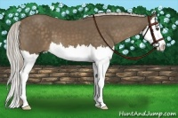 Horse Color:Chocolate Palomino Splash