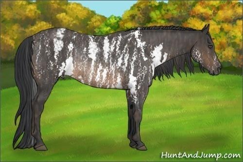 Horse Color:Buckskin Sabino Rabicano  Brindle