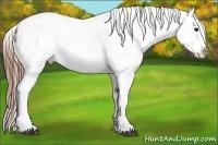 Horse Color:White Spotted Grullo Appaloosa Rabicano  Brindle