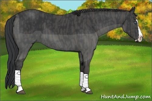 Horse Color:Black Splash Frame  Brindle