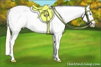 Horse Color:Perlino Appaloosa