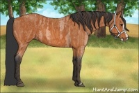 Horse Color:Bay Roan Splash Frame  Brindle