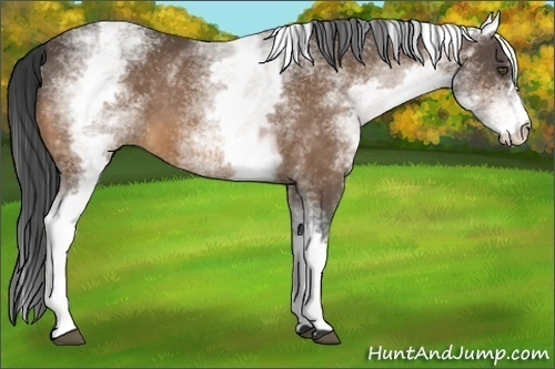 Horse Color:White Spotted Buckskin