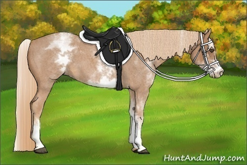Horse Color:White Spotted Red Roan