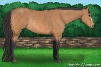 Horse Color:Buckskin Rabicano