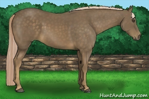 Horse Color:Chocolate Palomino Rabicano