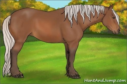 Horse Color:Silver Bay