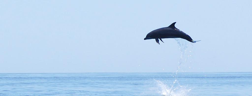 Kf mexico dolphin pc c.simon 2014