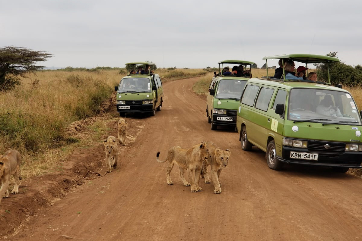 3 game drive