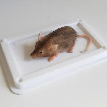 Rent Animatronic Trapped Mouse w/ Operator