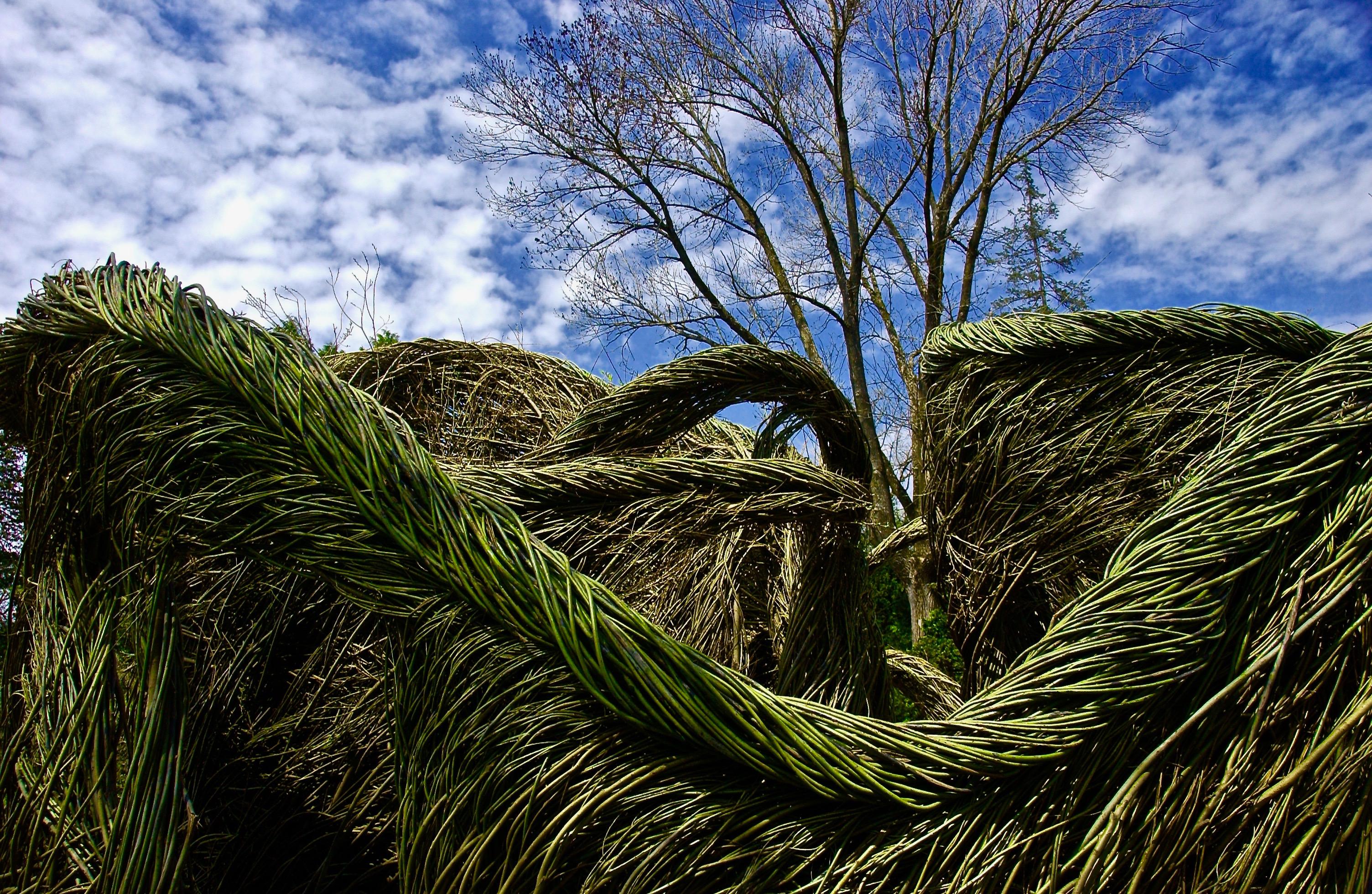 On a Walk; Morris Arboretum; Philadelphia, Pennsylvania, USA