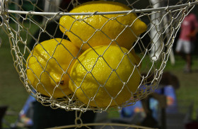 Lemons; Dukes County Agricultural Fair; West Tisbury, Martha's Vineyard, Massachusetts, USA. August 2012.