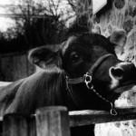 """Zoo Portrait"" Inna Spivakova, Basic Photography Fall 2006"