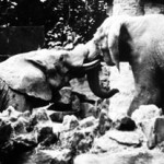 """Elephants"" Vince Camiolo, Basic Photography Fall 2006"