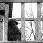 """Zoo Portrait"" David Pevar, Basic Photography Fall 2006"