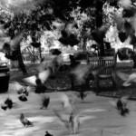 """Illusion of Movement"" Fernando Regencio Jr., Basic Photography Fall 2006"