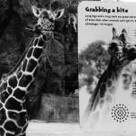 """Zoo: The Idea"" StephanieTremoglie, Basic Photography Spring 2005"