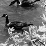 """River Study"" Stephanie Tremoglie, Basic Photography Spring 2005"