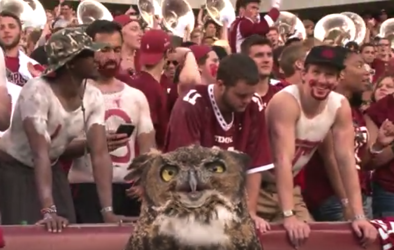 Temple University Bleeds Cherry & White All Over PSU