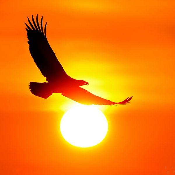 Орел и солнце картинка