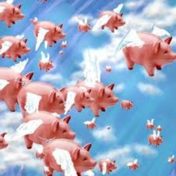 Pigs Might Fly Track