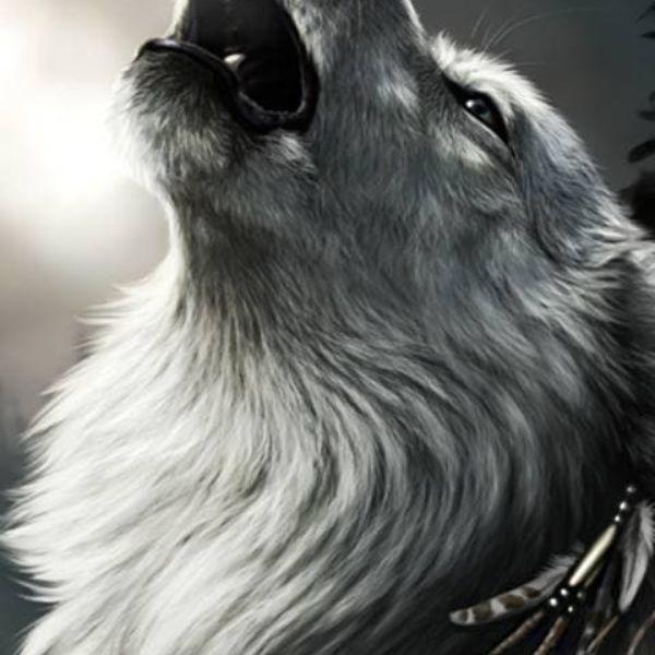 WolfD