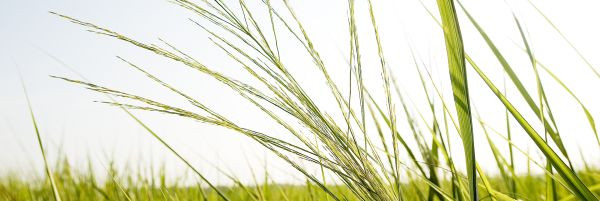 Carrollton To Enforce Grass Clipping Ordinance