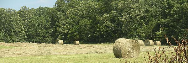 Hay market deals with shortage, toxicity and poor quality