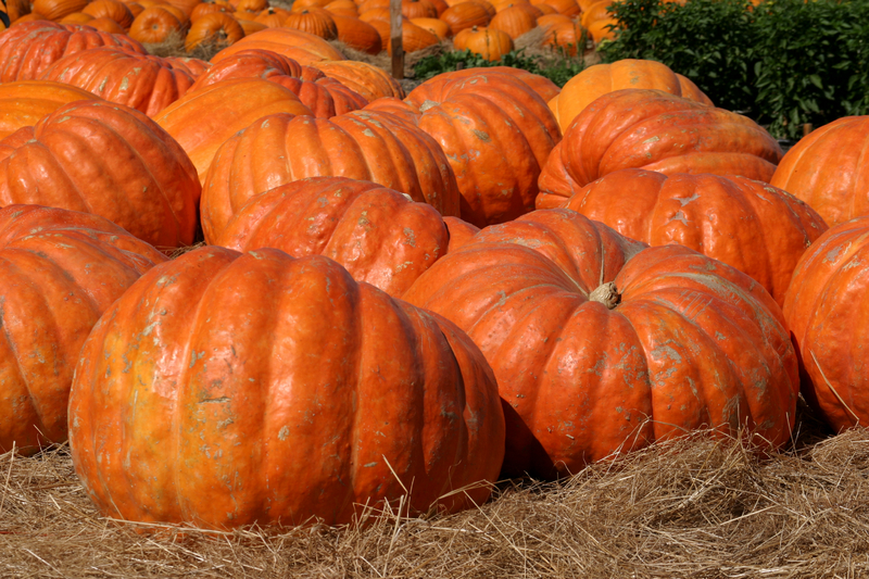 Wet summer means higher pumpkin prices in Missouri